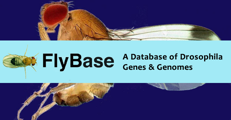 Comprehensive Drosophila melanogaster update from FlyBase includes 4,000+ New Interactions