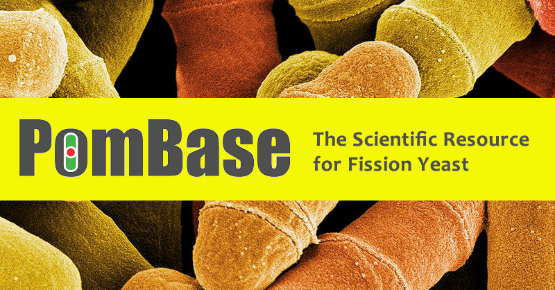 Comprehensive Schizosaccharomyces pombe update from PomBase includes 900+ New Interactions